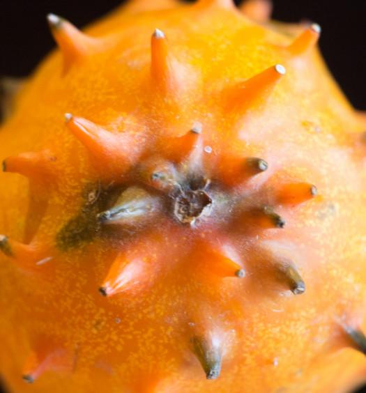 Horned Melon -2-2