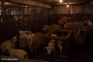 Farm Visit-18