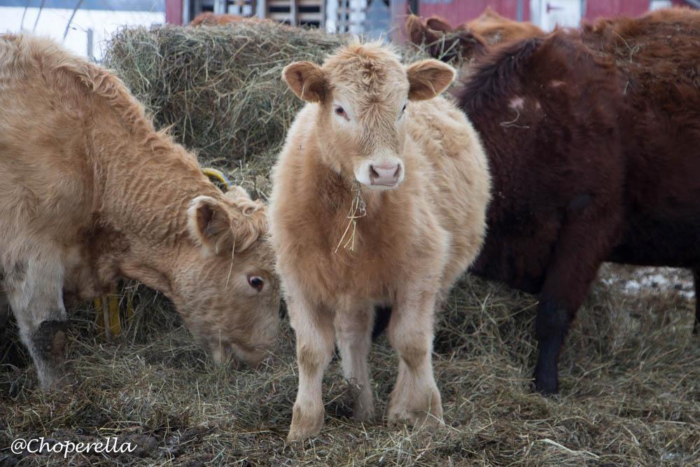 Farm Visit-7